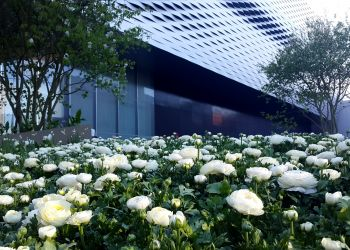 Baselworld 2017 flower beds